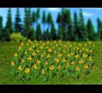 H0 5123 Daffodils